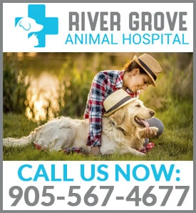 River Grove Animal Hospital