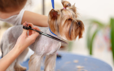 5 Health Benefits A Professional Pet Grooming Service Can Offer